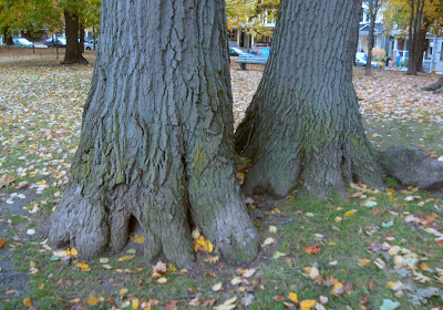 tree-feet