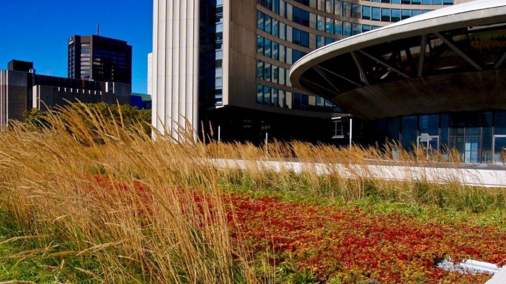 Toronto City Hall S Green Roof Is Worth The Climb