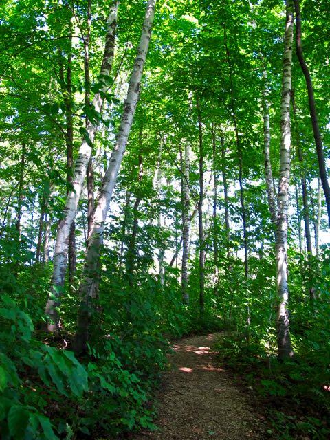 TorontoGardens-JardinsChaudiereBassin-Birches