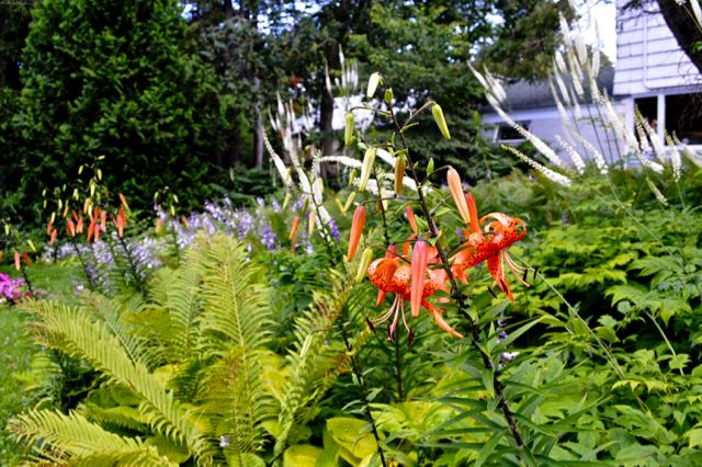 lilium-kelleykelley-torontogardens