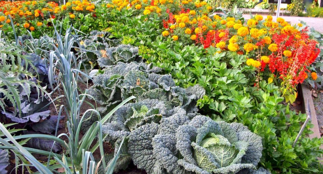 ornamentalvegetables-montrealbotanicalgarden-torontogardens
