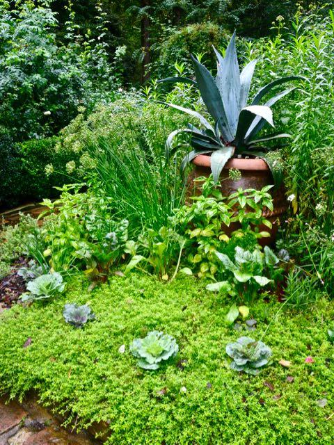 ornamentalvegetables-romanticgarden-herbgarden-torontogardens