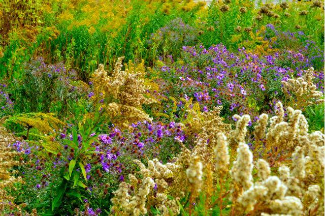 wildflowergarden-torontobotanicalgarden-torontogardens