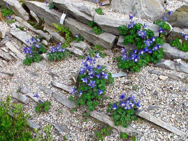 spring-crevicegarden-montrealbotanicalgarden1-torontogardens