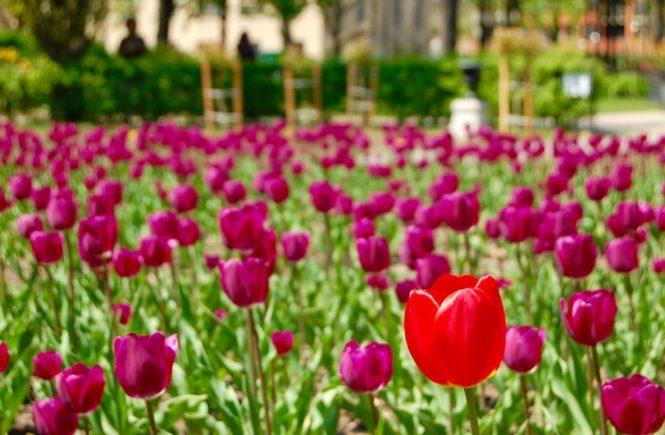 Battle Of The Bulb Planting Tools Toronto Gardens