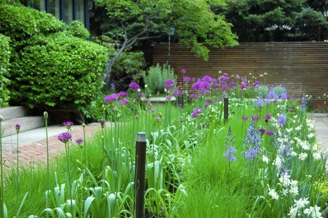Cool designs with ornamental grasses - Toronto Gardens