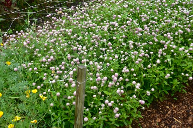 A Cunning Plan For Your Cutting Garden Toronto Gardens Extraordinary Cutting Garden Design Plans