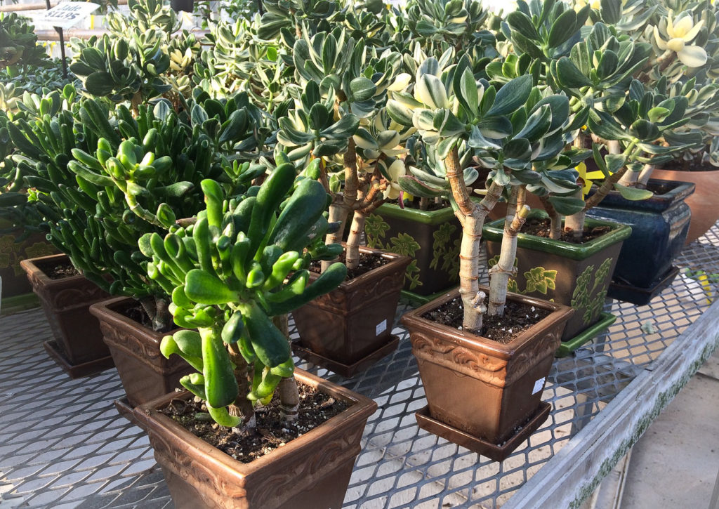 One Of Our Favourite East End Nurseries, Valleyview Gardens, Has Sadly  Moved Out Of Town. Driving To Their Old Location On Kennedy Ave, With My  Flasher On, ...