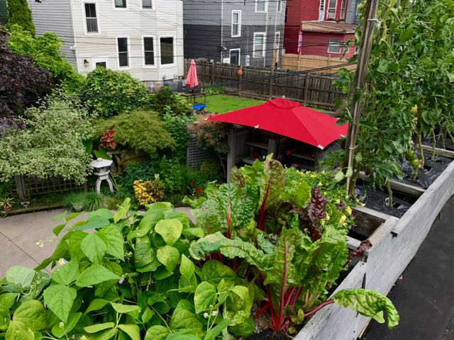 Lots Of Good Things Growing In That August Sunshine Including Eggplant Peppers Tomatoes Swiss Chard Beans And Herbs Below A Closer Look At What Its