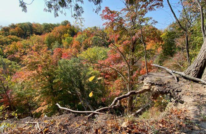 Bruce Trail near Dundas Ontario